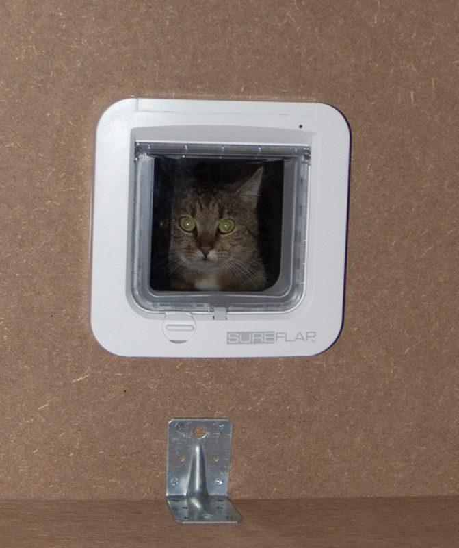 Katze schaut durch Katzenklappe