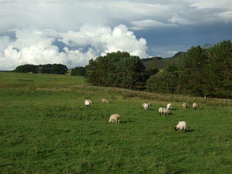 Schafe und Wolken :D