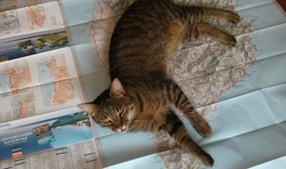 Fun with Maps – Cat Edition