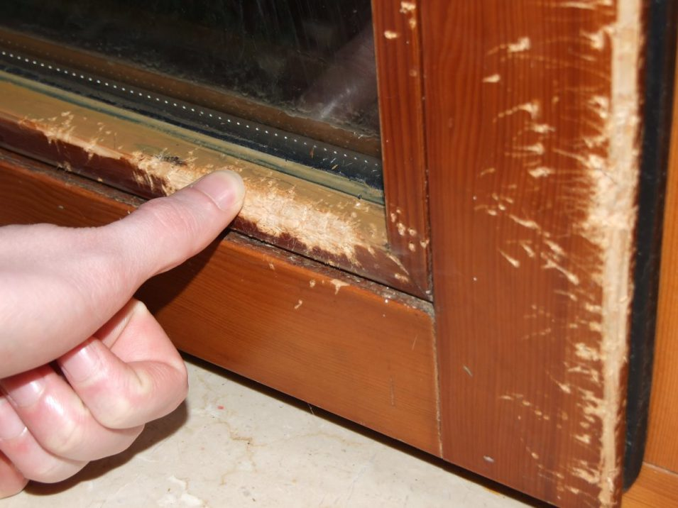 Katze zerkratzt Fenster