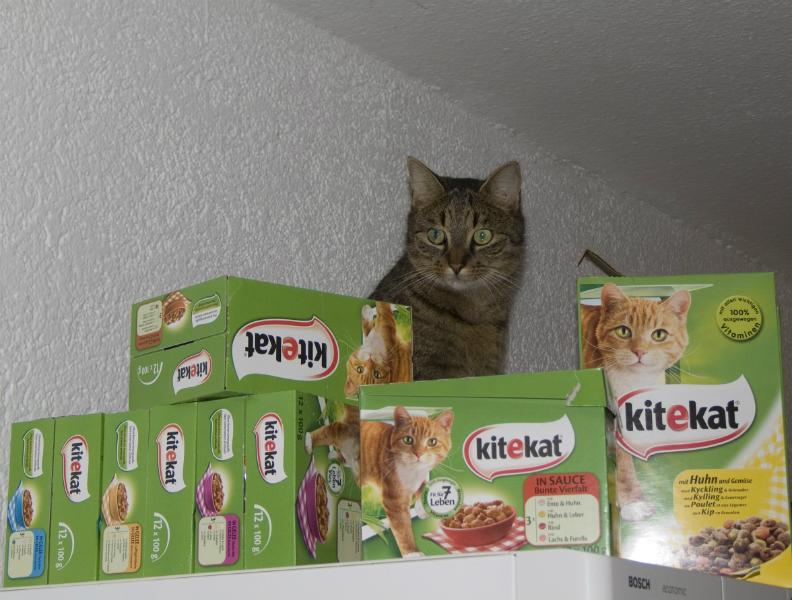 Kater Lopi und seine Festung aus KiteKat