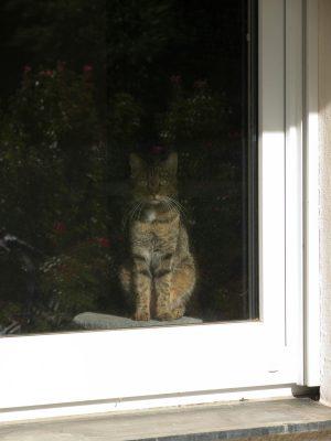 Katze hat Hausarrest