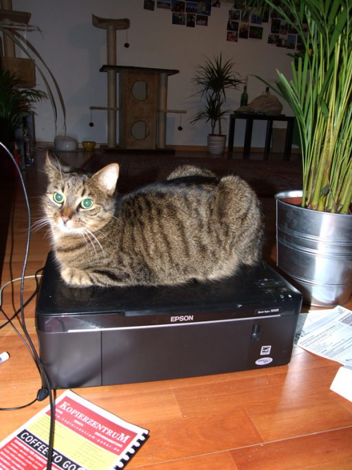 Kater auf Drucker