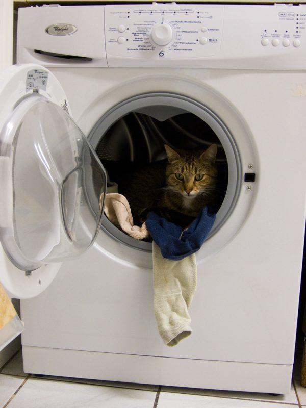 Katze in der Waschmaschine