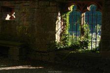 Umranktes Fenster im Klostergarten von Stift Neuburg