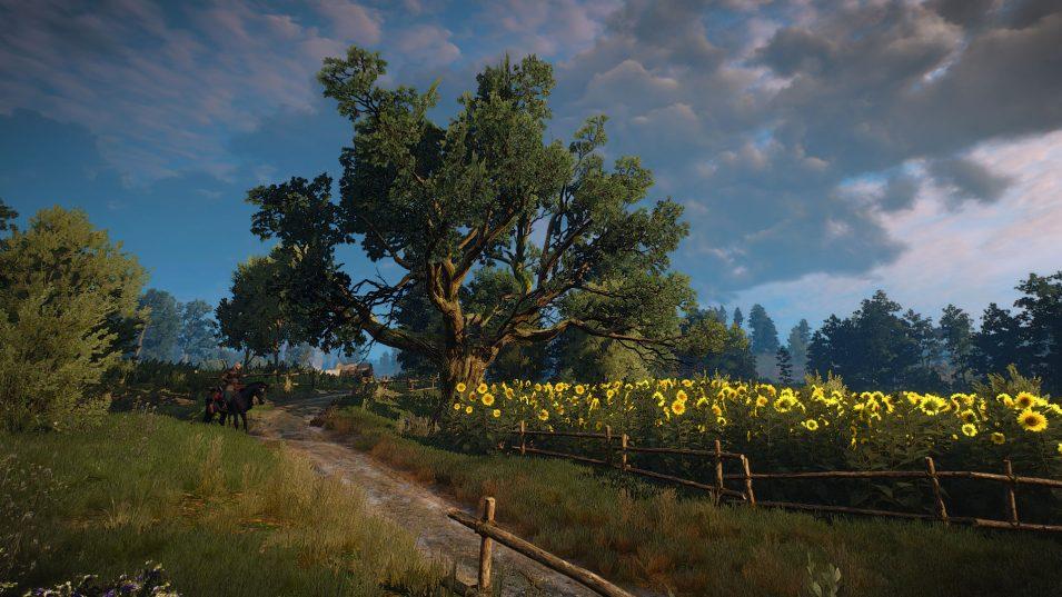 Witcher 3 - Sonnenblumen