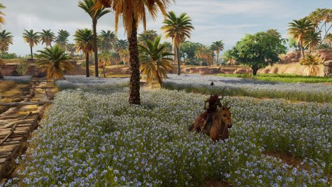 Assassins Creed Origins | Blumenfelder