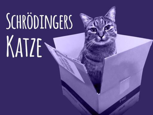 Schrödingers Katze - Gleichzeitig süß und tödlich nervig