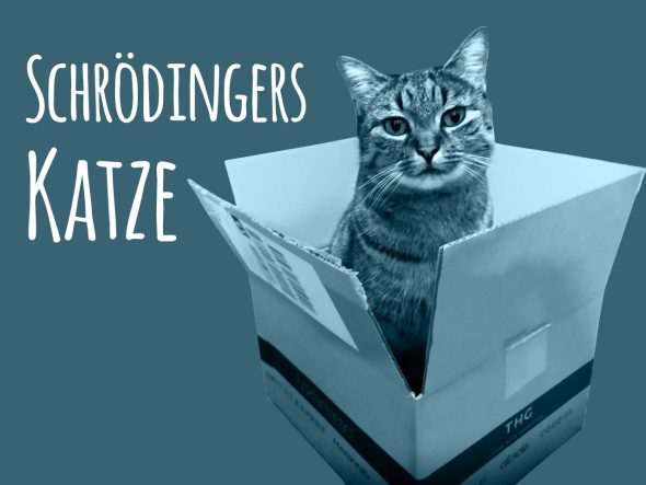 Randnotiz: WM-Tor mit Katzenpanik
