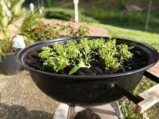 Alter Grill als Pflanzenkübel