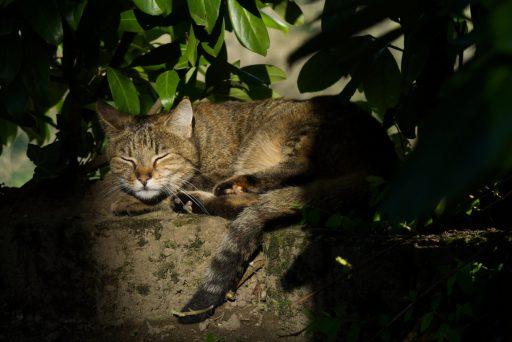 Katze Luna liegt im Garten