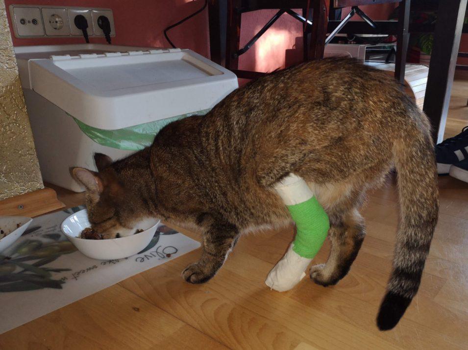 Katze mit bandagiertem Bein