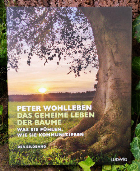 Peter Wohlleben – Das geheime Leben der Bäume