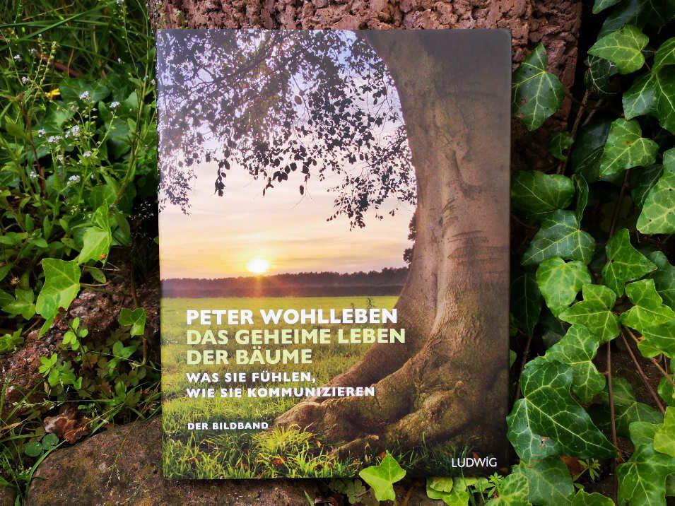 Cover Peter Wohlleben - Das geheime Leben der Bäume