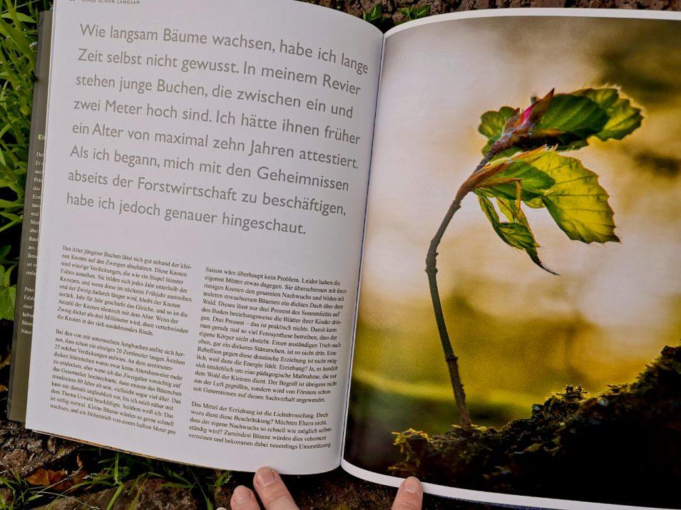 Textseite aus Peter Wohlleben - Das geheime Leben der Bäume