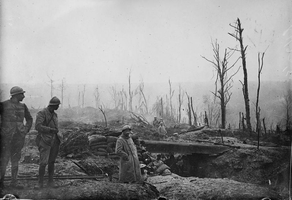 Zerstörte Bäume bei Verdun