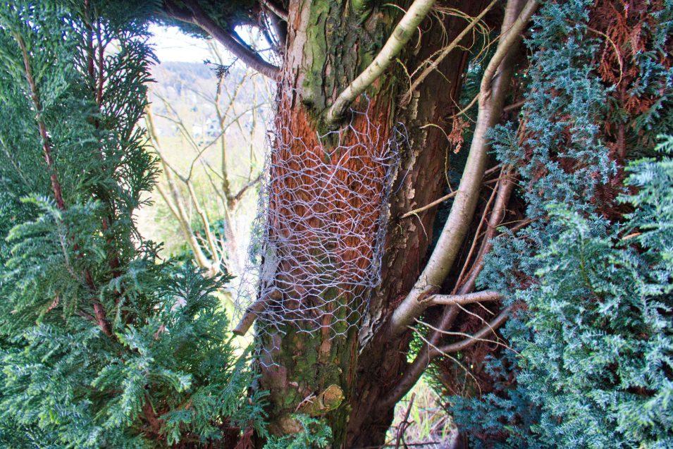 Geschützter Kratz-Baum