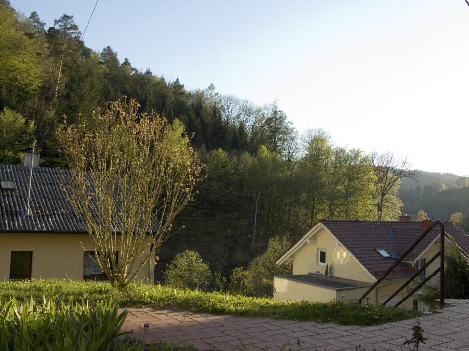 Lunas Busch in Schönau