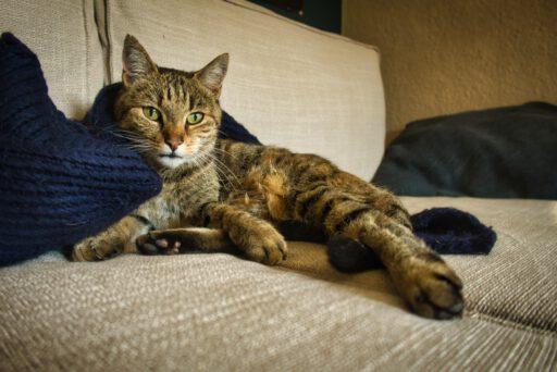 Luna auf der Couch