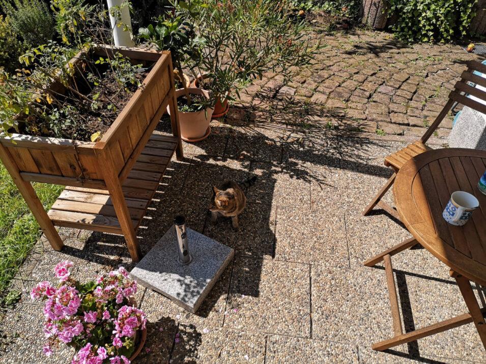 Terrasse: Rechts mein Platz, links meine Aussicht, zentral eine Katze